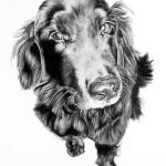 pet portrait 1
