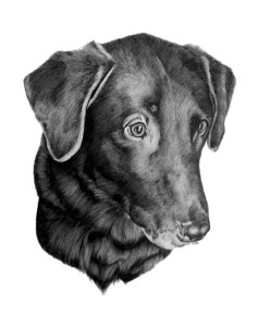 pet portrait 2