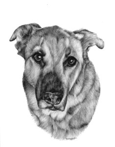 pet portrait 4